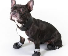 Protective Dog Boots